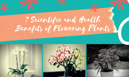 7 Scientific and Health Benefits of Having Flowering Plants at your home